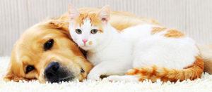 ゾニサミド 犬猫用 てんかん発作の治療薬