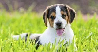 犬 野外で遊ぶ!寄生虫駆除薬「ドロンタール犬用」通販